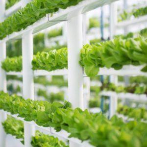 Hydroponic Water Changes