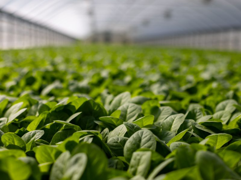 The Easiest Plants for Hydroponics