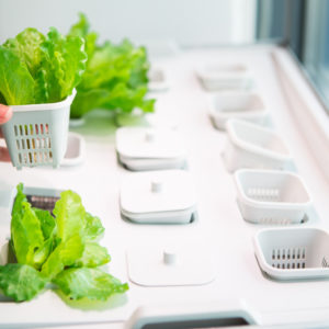 Equipment That Certain Hydroponic Systems Need