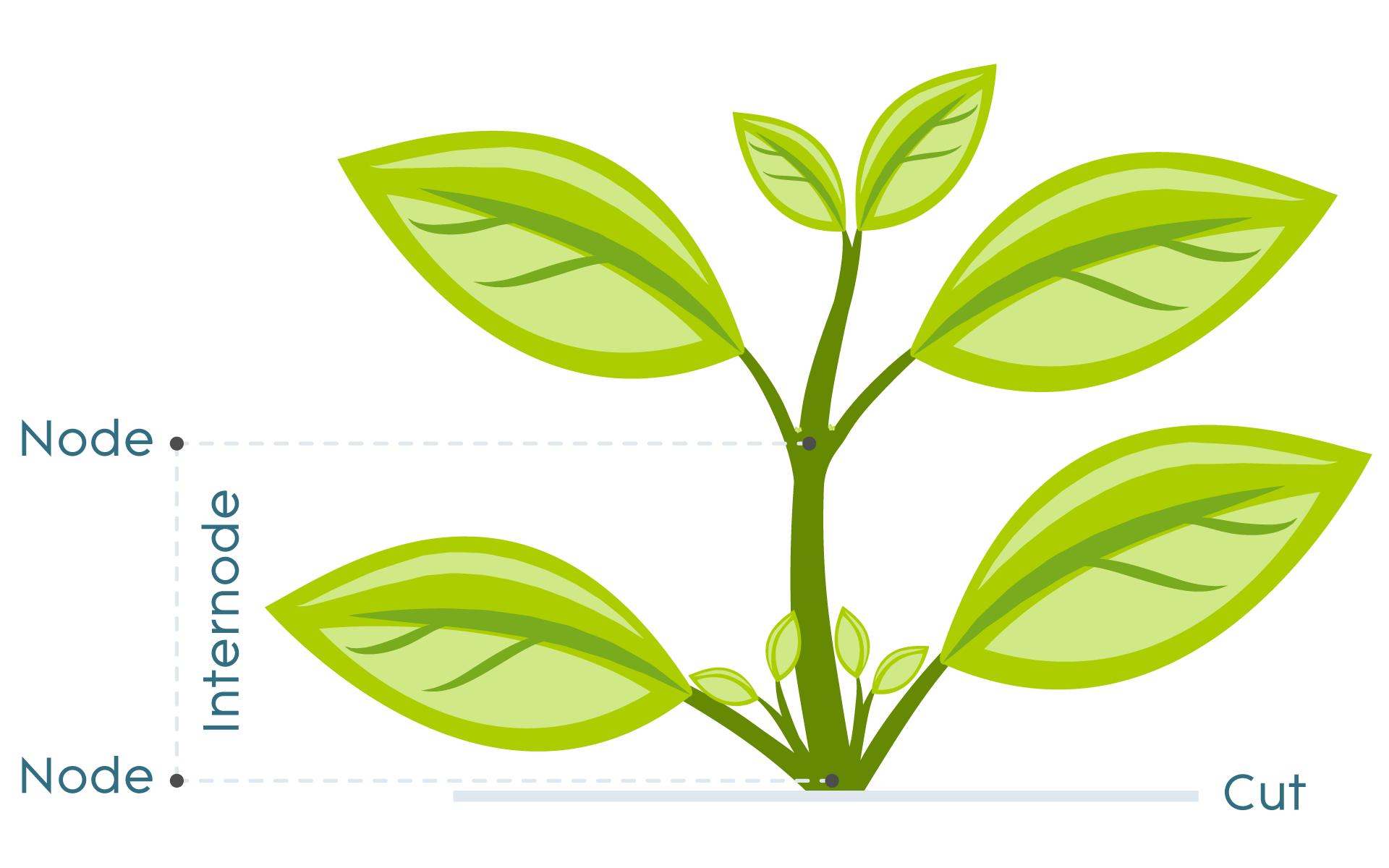 Plant Cloning Illustration