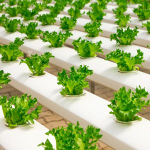 Basic Equipment for Hydroponic Systems