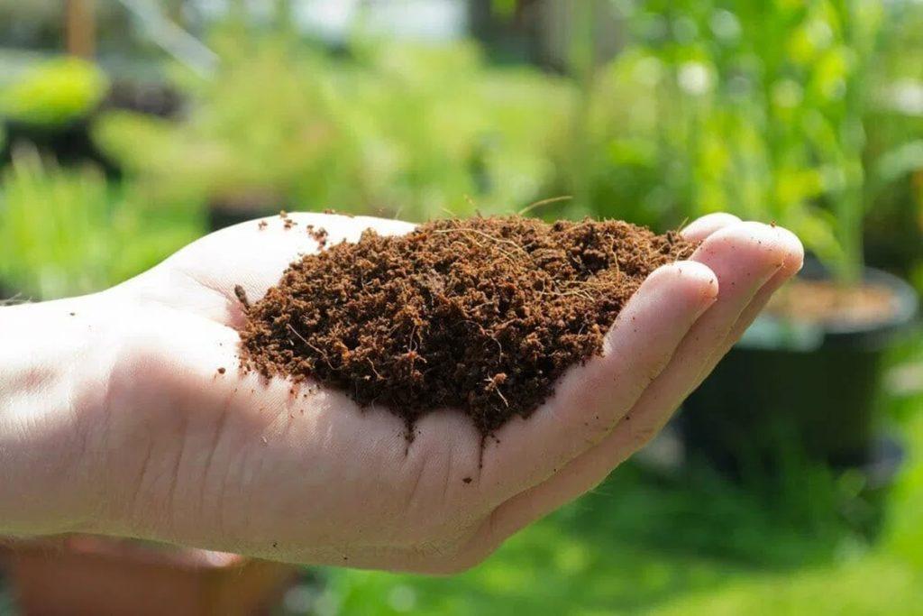 Coco Coir - Hydroponic Growing Medium
