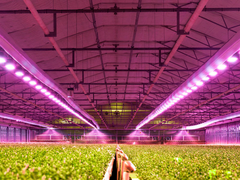 When to Replace Grow Lights