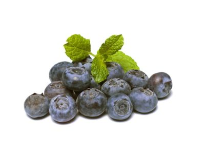 How to Grow Blueberries using Hydroponics