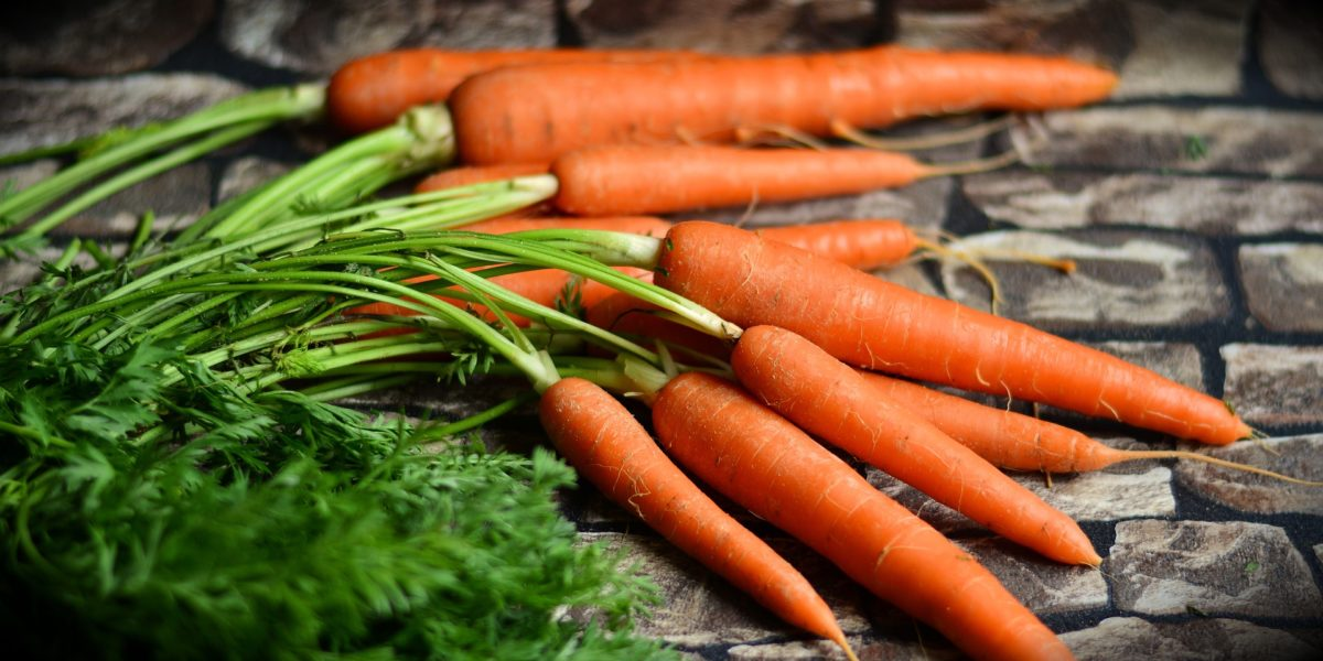 Growing carrots using Hydroponic Systems