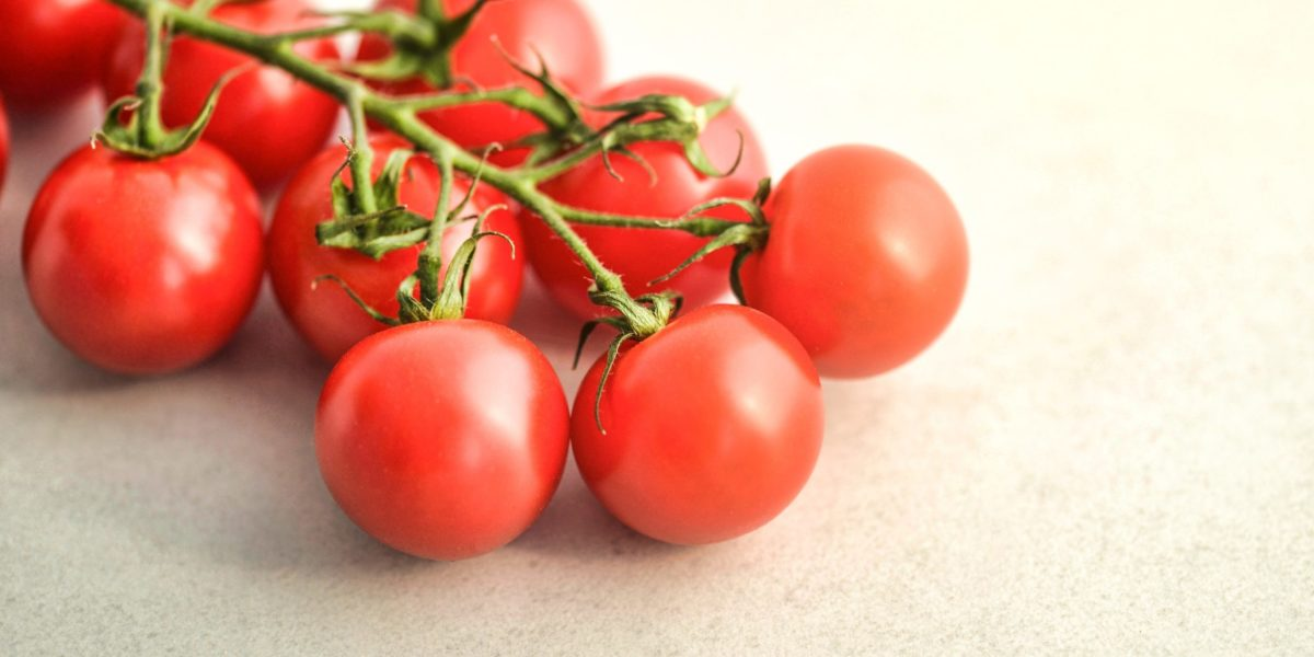 Growing tomatoes in hydroponics