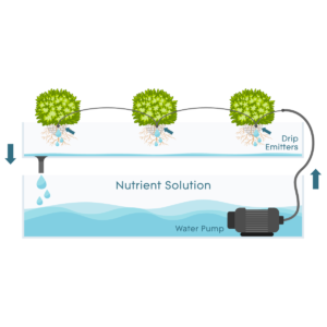 Drip Systems - How They Work