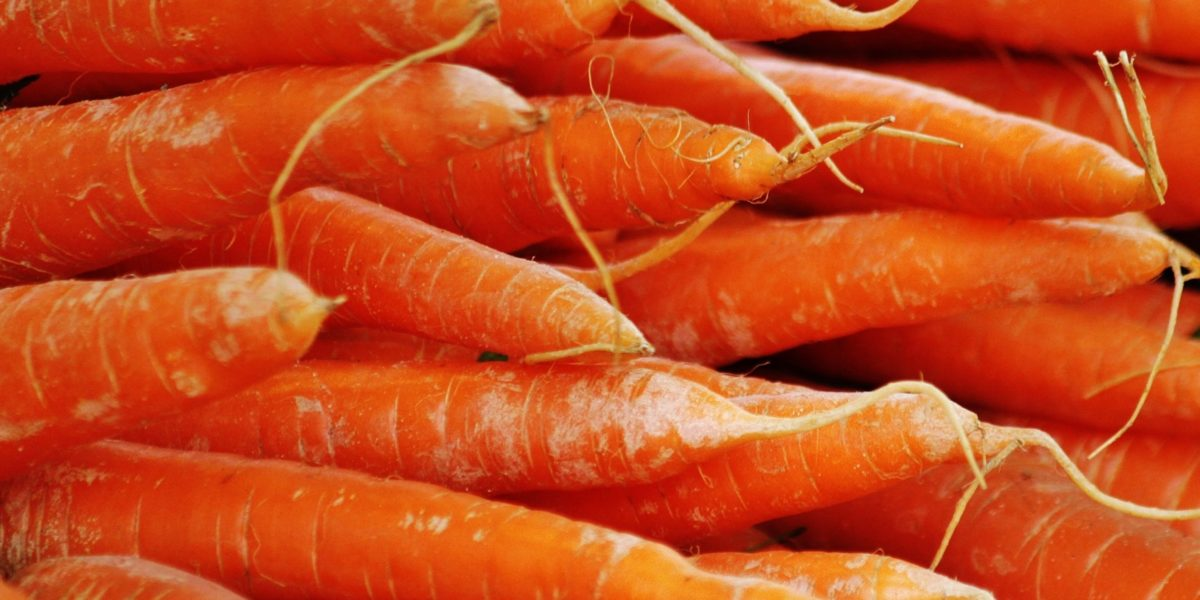 growing carrots in hydroponics