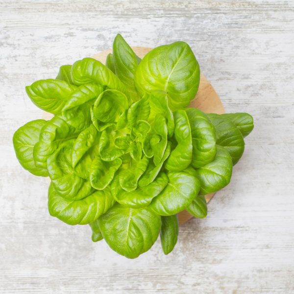 Salad in hydroponic