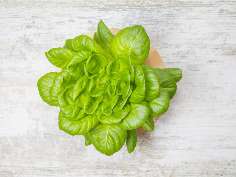 Grow Hydroponic Lettuce – The Guide