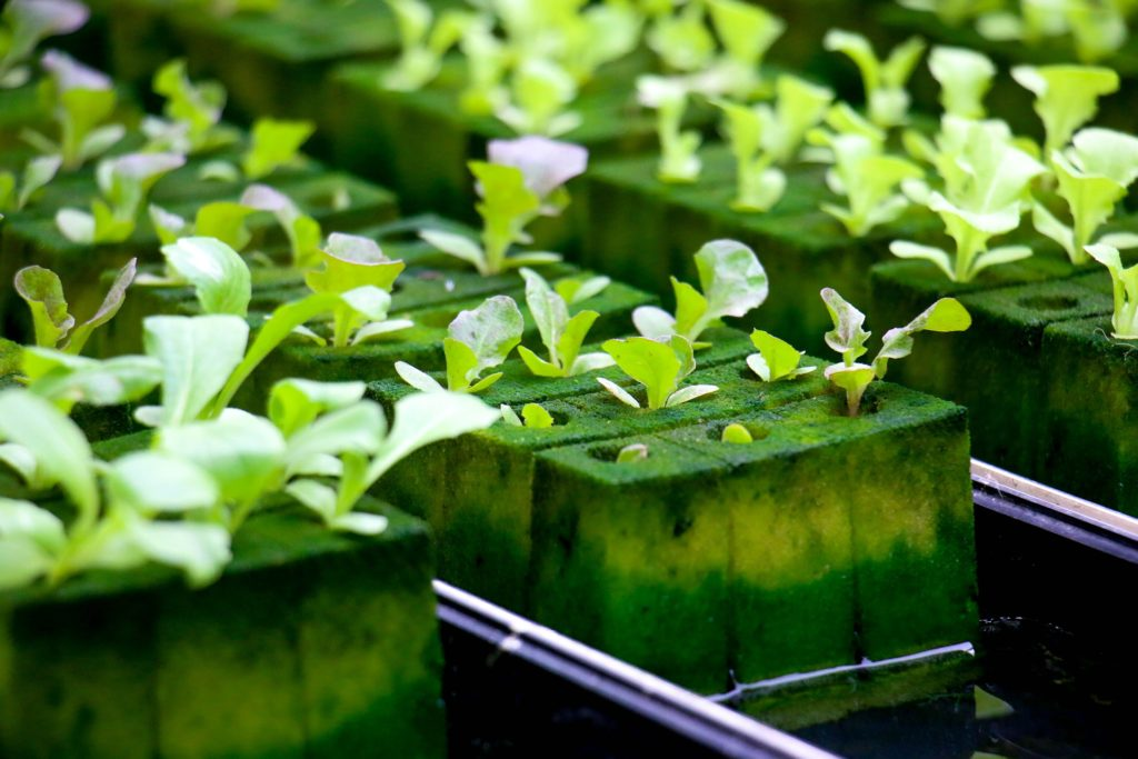 Equipment for Hydroponic Systems