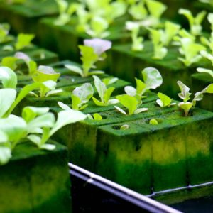 What to look for while choosing a hydroponic growing medium