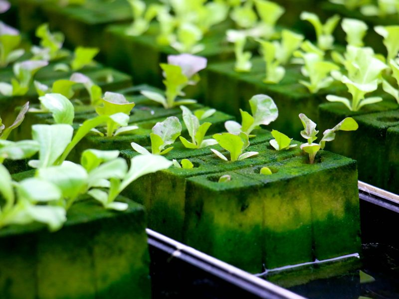 What Equipment Each Type of Hydroponic System Needs