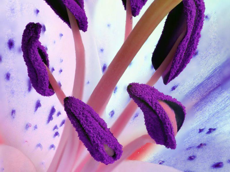 Hand Pollinating Plants – 3 Ways