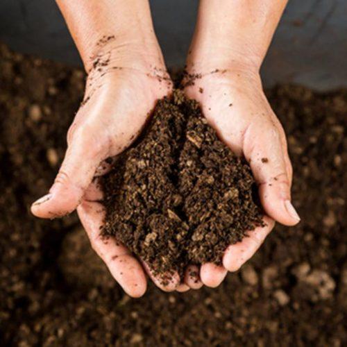 Peat moss - Hydroponic Growing Medium