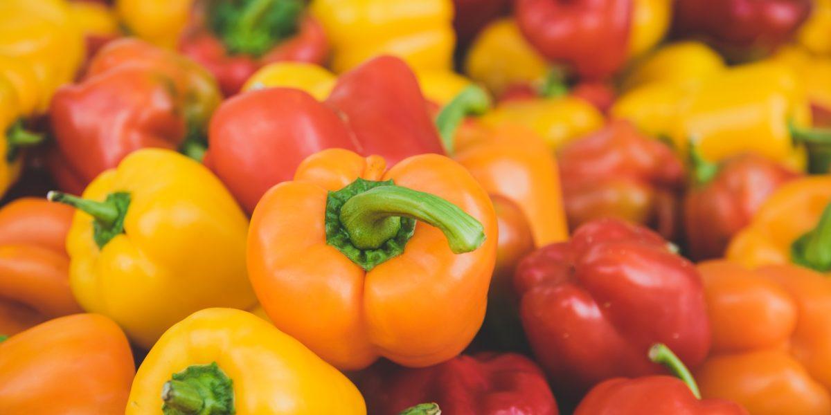 Bell pepper in hydroponics