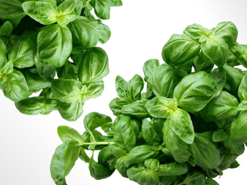 The Best Plants for Aquaponics