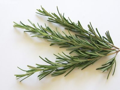 Rosemary in auqaponics