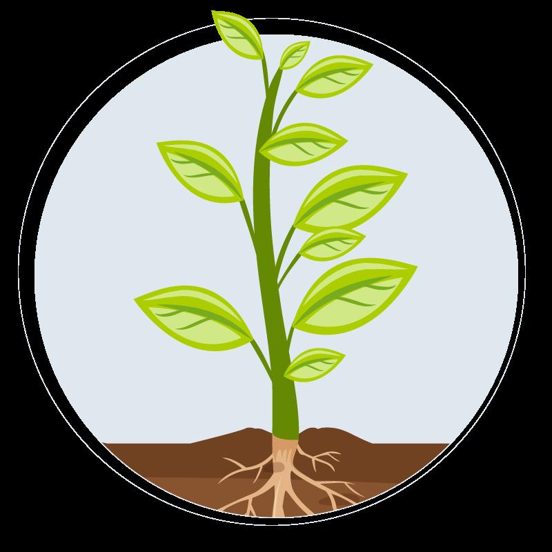 Stage 3 Vegetation