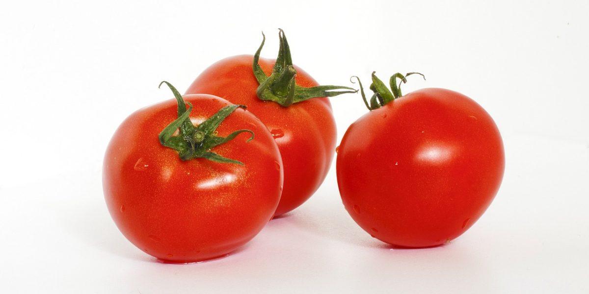 Grow hydroponic tomatoes
