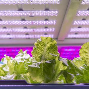 How to Measure LED Grow Lights