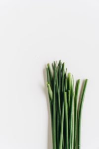 hydroponic chives