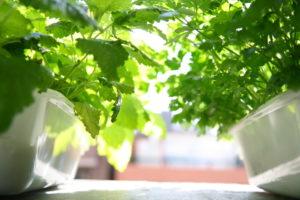 beginning hydroponics with easy DWC system