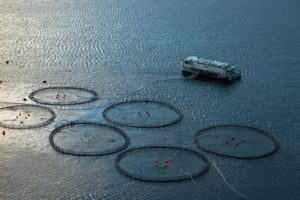 mariculture system