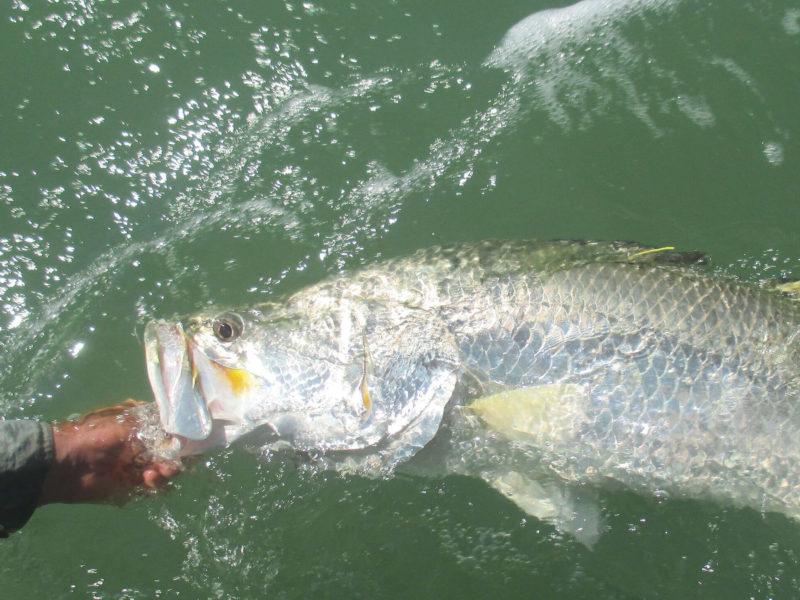 Fish for Aquaponics (Intermediate)