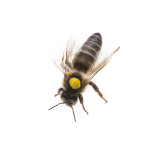 Queen Bees - An Overview