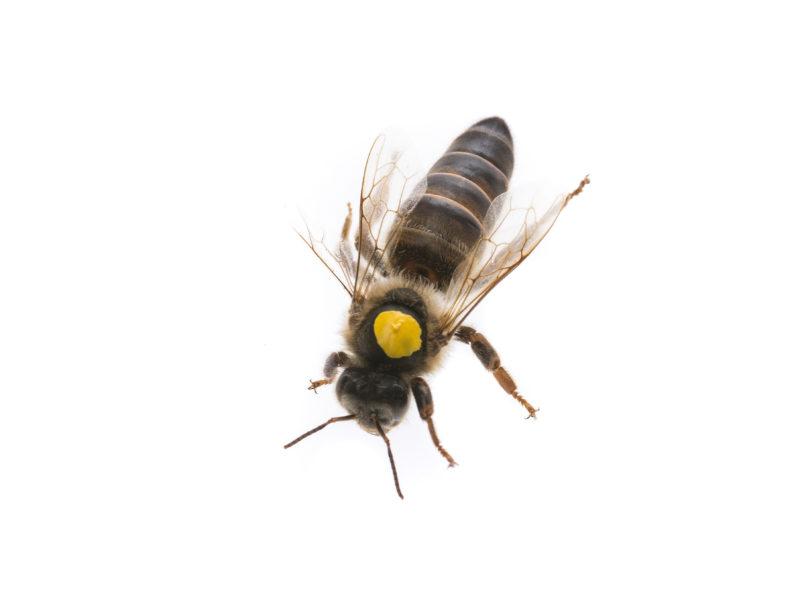 Queen Bees – An Overview