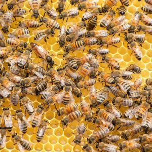 Roles of Bees in the Hive